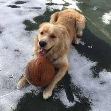 He is good at playing with balls