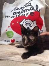 Lanta Animal Welfare Eco-Tote Bag