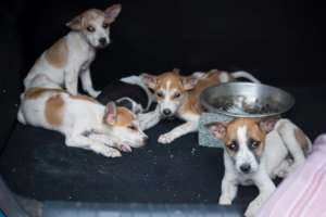 Puppies rescued from abusers