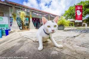 Future Kitty City Resident