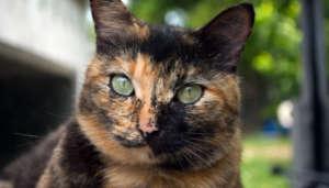 Richola's amazing green eyes