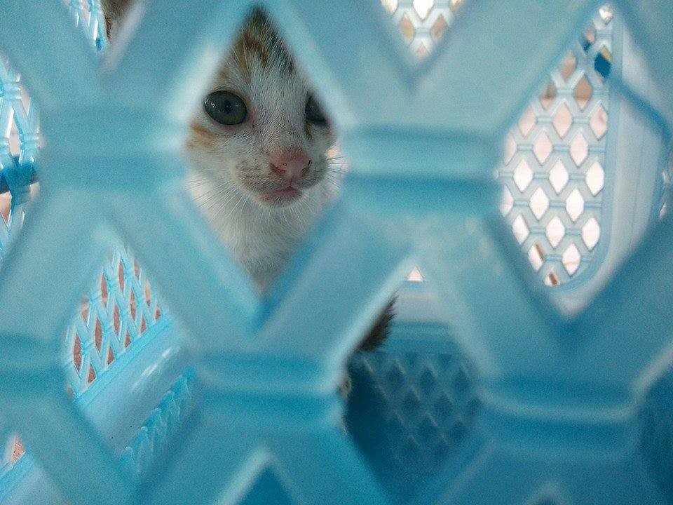 Give Rescue Cats a Safe Future