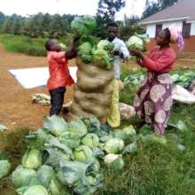 Three participants packing their harvest