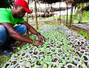 Seedling Production