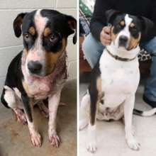 Maximus was stabbed repeatedly by his owner.