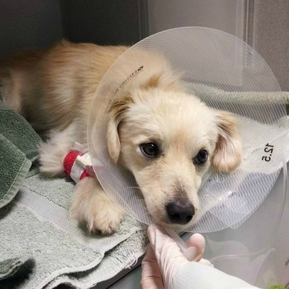 Save Sick, Injured and Abused Homeless Pets!