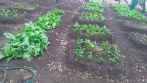 Gardening @ Drop in Centre