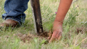 Planting trees in 2017 on Pine Ridge