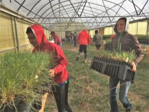 Volunteer to plant trees on Pine Ridge!