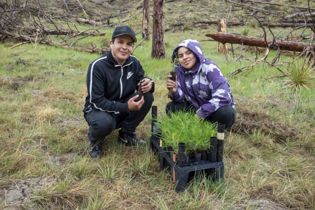 Help Reforest the Indigenous West
