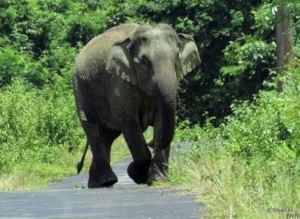 Elephant in Corridor