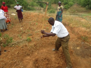 Farmers preparing holes to plant moringa