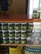 Moringa to support Kenyan farmers health & wealth