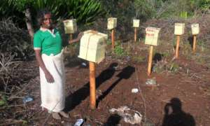 One tribe woman involving in honey bee