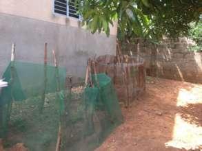 Vegetable garden in Benin