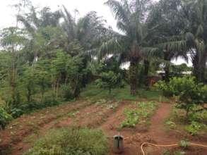 Vegetable garden in Benin_2