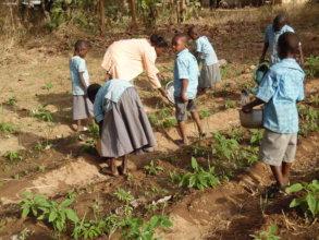 Realization of gardens in Benin
