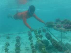 Kiritimati Super Coral Nursery