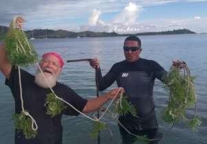 Seaweed Farming Trials Begin in the Fiji Sites!