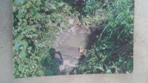 3 Pond where community members used to collect wat