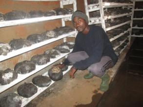 Green Care Staff Inspects Growing Mushrooms