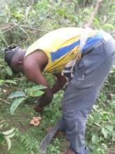 Collecting wild mushrooms to culture