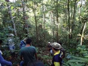 Virgin forest in Nueva Saposoa