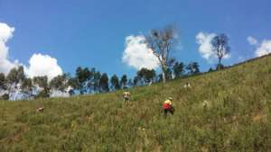 Reforestation up the hill!