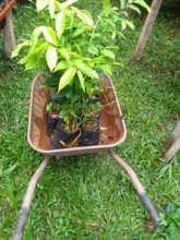 Full wheelbarrow