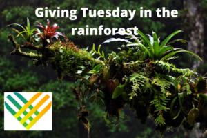Rainforest Giving Tuesday