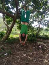Gui proving trees are fun
