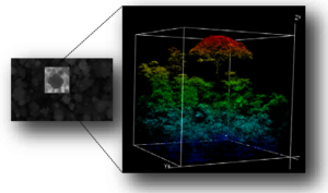 3D monitoring of forest layers
