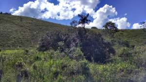 Recent forest growing around spring