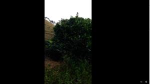 Planting on Rosilene's forest