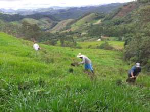 Future forested hillside
