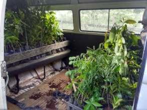 IraKombi full of seedlings