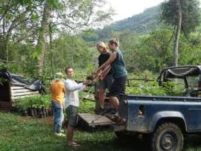 Loading up the seedlings