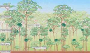 Monitoring forest growth