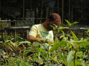 Working in the forest nursery