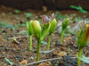 Super seedlings