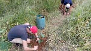Volunteers planting seedlings