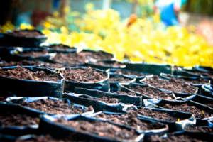 Seedlings are hatching here!