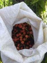 Ready to germinate