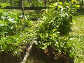 Some separated seedlings