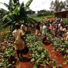 Students preparing to harvest their garden