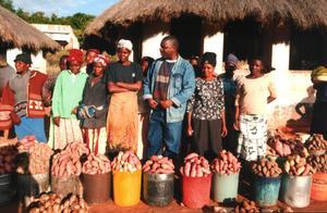 Women in Mutasa selling surplus sweet potatoes