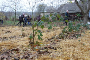 Mulch protecting from frosts, preserving humidity