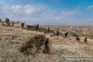 Planting trees to prevent soil erosion