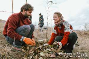 Mobilizing volunteers for tree-planting