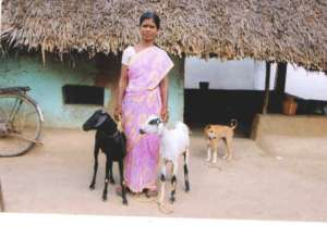Confidence brims with arrival of goats